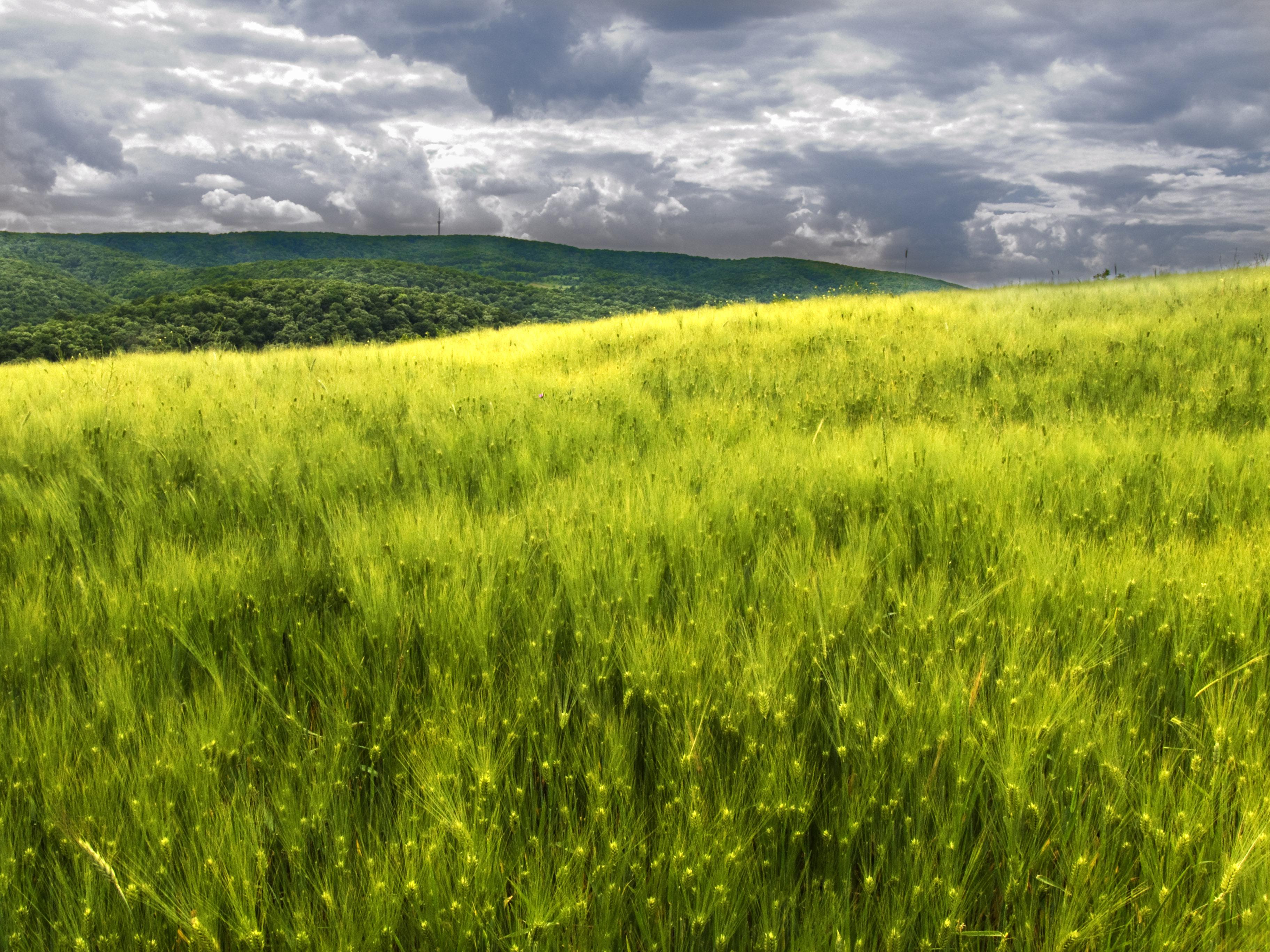 Pozemek - pozemková renta - pole