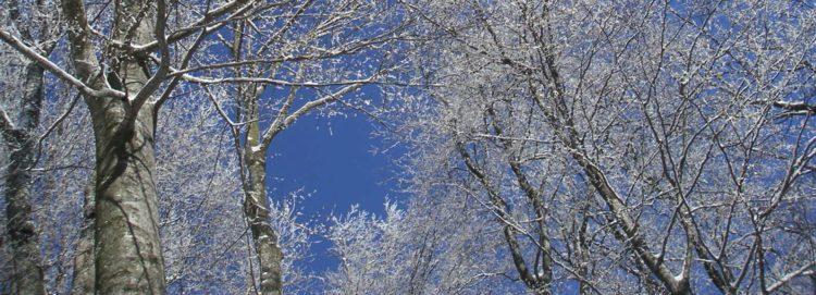 Zima, sníh, winter