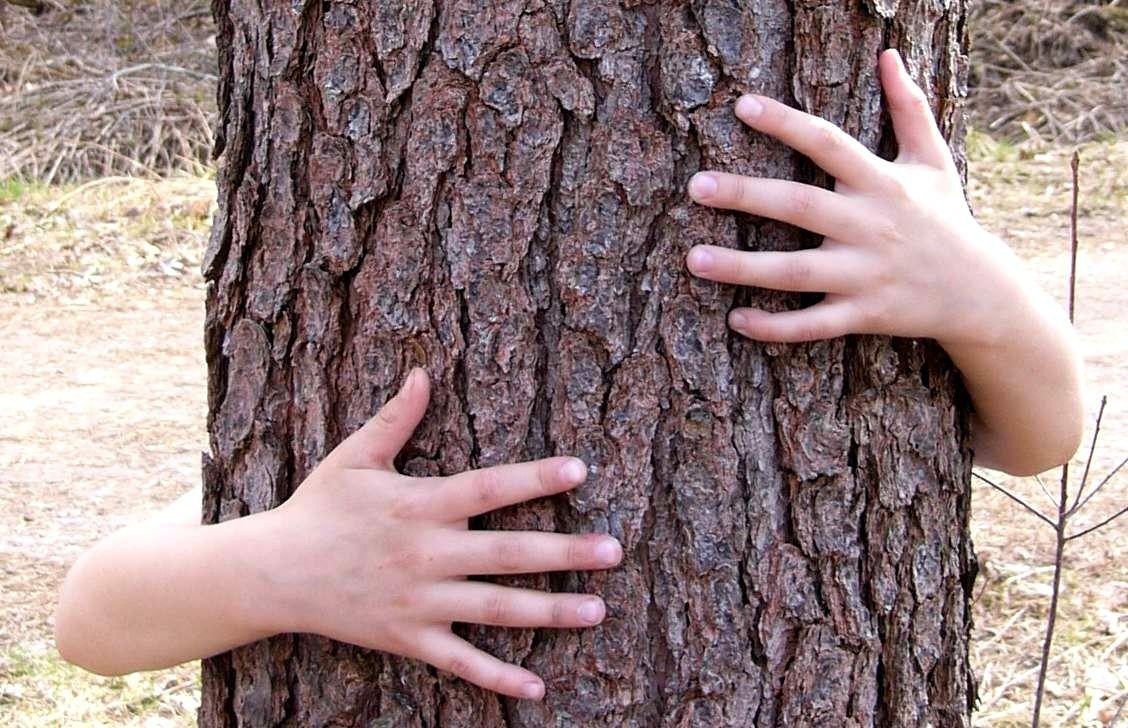 Dětské ruce drží a objímají kmen stromu