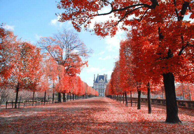 Služebnost cesty - zámek - cesta - podzim - červené listí - stromy