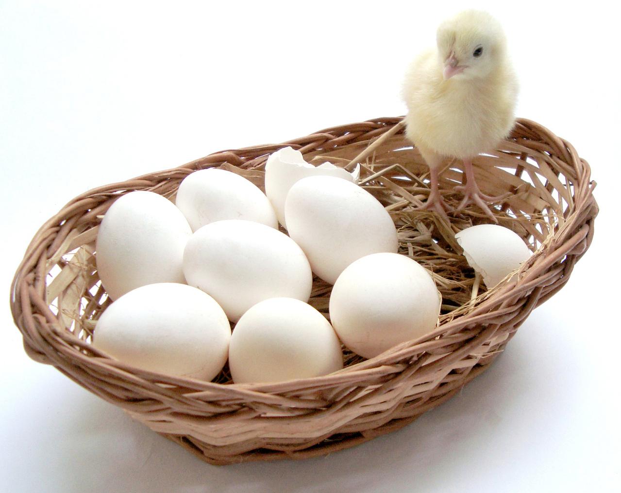 Košík - vajíčka - kuře - spotřební koš