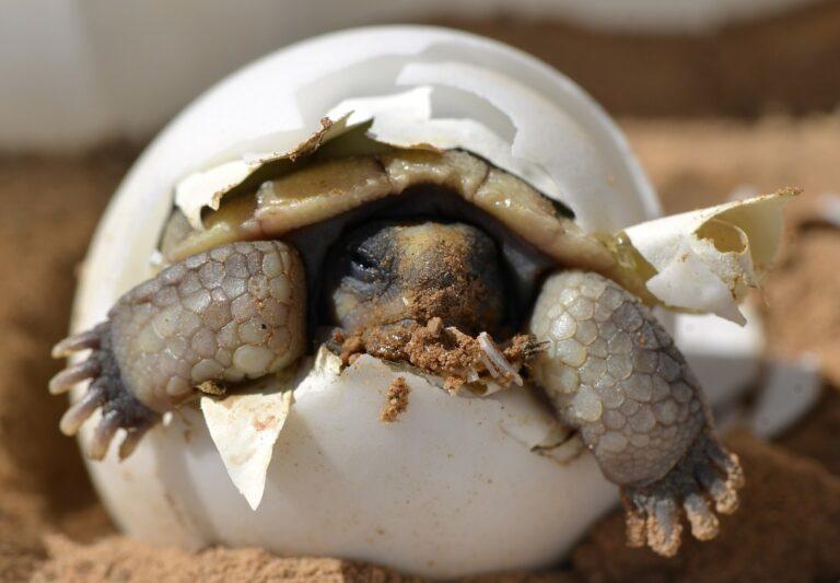 želva klubající se z vajíčka - dlouhodobé fixace hypoték